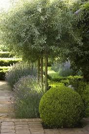 dought tolerant plants french lavender