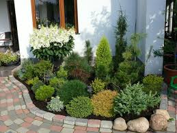 dwarf conifer landscaping small front