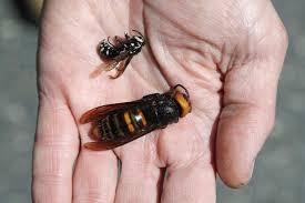 hornets as hype