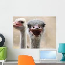 Hot Ostrich Wall Decal Wallmonkeys Com