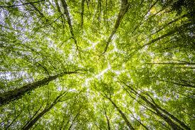 Immagini Belle : albero, natura, verde, ecosistema, foglia ...