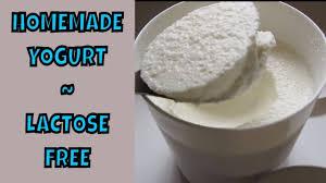 homemade yogurt lactose free scd