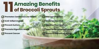 amazing benefits of broccoli sprouts
