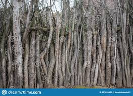 Tree Branches Fence Stock Image Image Of Twig Natural 151026615