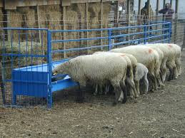 Sydell Sheep Goat Large Hay Grain Feeders Hay Racks Mangers Goats Sheep Hay Racks