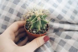 ini pelajaran hidup yang dapat kita petik dari kaktus