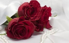 صورة وردة جميلة ورود حمراء جميلة للمناسبات صور حب