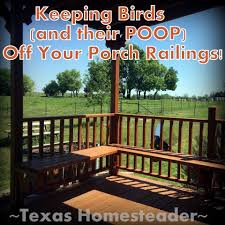 easy solution for keeping birds off