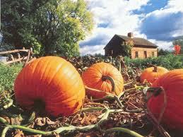 47 free pumpkin desktop wallpaper on