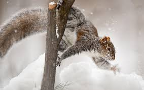 Image result for squirrels in the snow