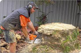 Stump Grinding Perth - Tree Stump Removal by Williams Tree Pro