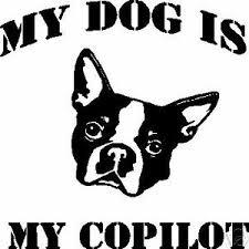 My Dog Is My Copilot Window Decal Bumper Sticker Ebay