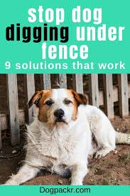 How To Stop Your Dog From Digging Under A Fence Dogpackr