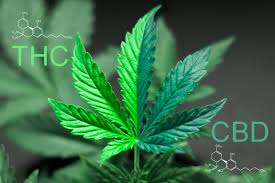 Medical Marijuana, Cannabis, & CBD for Lyme. - Treat Lyme
