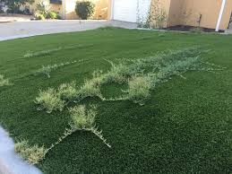 you can rip out your socal lawn for