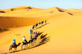 desert safari in jaisalmer experience the thrill