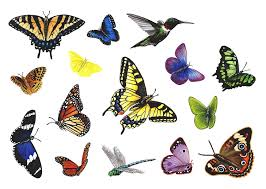 Butterfly Wall Decal Hummingbird Wall Decal Dragonfly Wall Decal