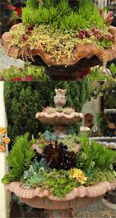 plant beautiful succulent gardens