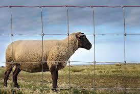 Redbrand Sheep Goat Fence Hutchison Inc Com