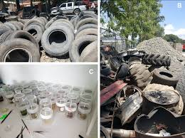 Sources Of Discarded Vehicle Tires And Mosquito Breeders In The Download Scientific Diagram