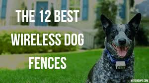 The 12 Best Wireless Dog Fences In 2020 Merchdope