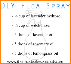 diy essential oil flea spray the