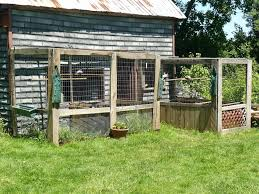 Lets See Your Geese And Breeder Pens Backyard Chickens Learn How To Raise Chickens
