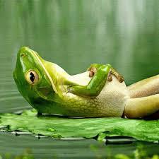 Čuda Allahovog stvaranja: 5 zanimljivih činjenica o žabama - AKOS