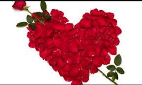 rose red rose flower romance
