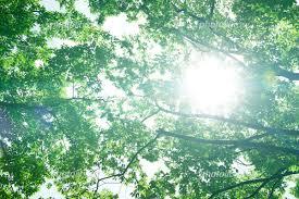 夏の日差し 写真素材 [ 5108243 ] - フォトライブラリー photolibrary