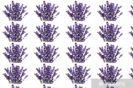 lavender wallpaper pixers we live