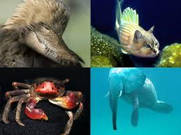 Photoshopで合成された動物たちの写真 - GIGAZINE