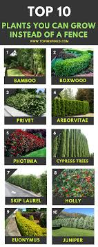 Top 10 Beautiful Plants You Can Grow Instead Of A Fence Top Inspired Backyard Trees Natural Fence Fence Plants
