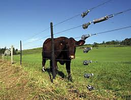 Benefits Of Electrified High Tensile Fencing