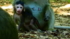 newborn baby pink monkey looking pretty