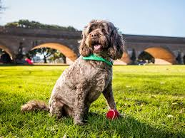 The Best Off Leash Dog Areas And Dog Parks In Melbourne