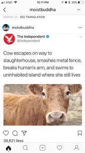 Nihilist Cow Memes Home Facebook