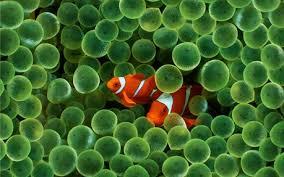 Clown Fish para Sendo J520 - Todotech.com