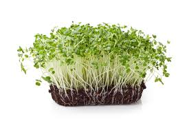 incredible benefits of broccoli sprouts