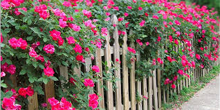5 Ways To Design With Roses Grow Beautifully