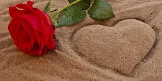 alasan untuk memberi bunga mawar pada pasangan kaskus