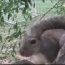 A Poor Squirrel Got His Nuts Stuck In The Worst Possible Way Video 95 1 Ksky