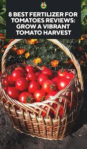 8 best fertilizer for tomatoes reviews