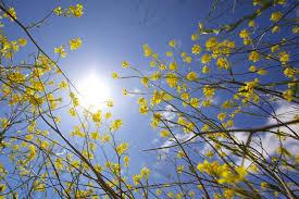 Coronavirus: Europeanen hebben erop aangedrongen 'verleiding' van zonnig weekendweer te vermijden