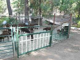 Southern Oregon Soay Sheep Farms Shelter And Fencing