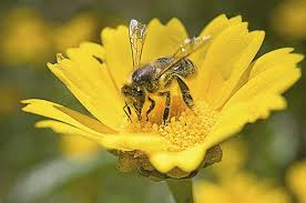 top 10 flowers that attract bees