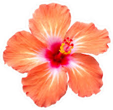 Hibiscus Flower Car Stickers Decals Over 80 Unique Designs