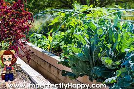raised bed garden round up the