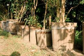 green plants in rustic wooden barrel