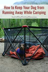 How To Keep Your Dog From Running Away While Camping